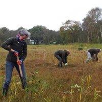 Vrijwilligerswerk in de duinen van Schiermonnikoog